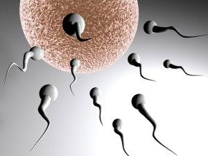 infertilidadeculturamix